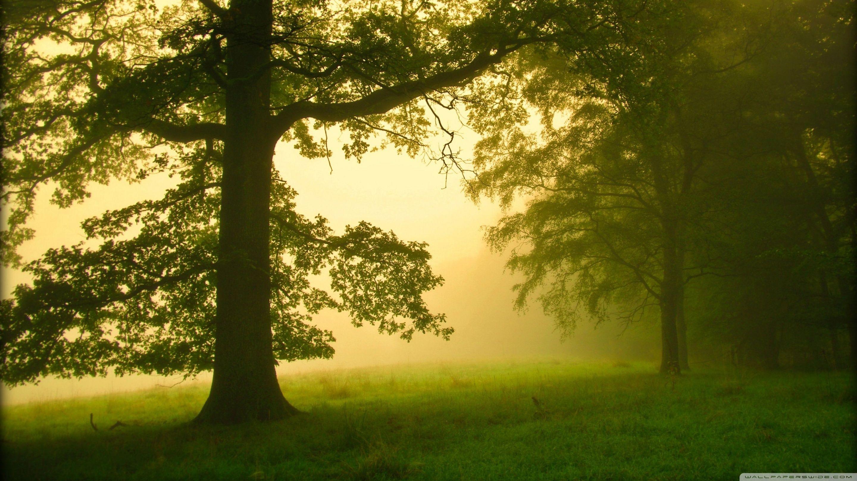 morning_mist_2-wallpaper-2880x1620