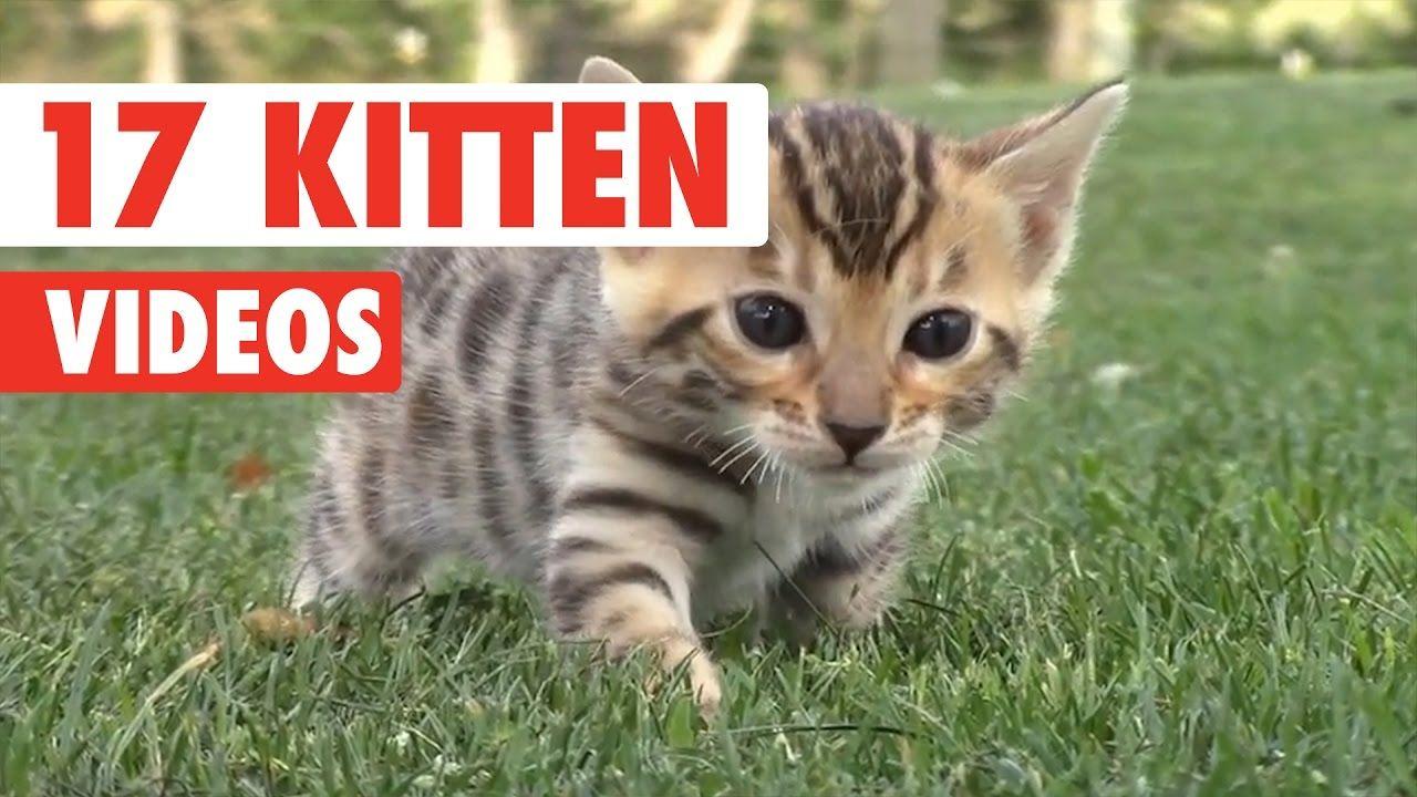 17 Funny Kitten Videos Compilation 2017 Kittens Funny Cute Cats