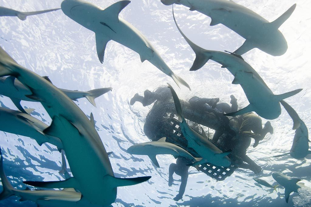 USS Indianapolis sinking: 'You could see sharks circling' - http://www.warhistoryonline.com/war-articles/uss-indianapolis-sinking-you-could-see-sharks-circling.html