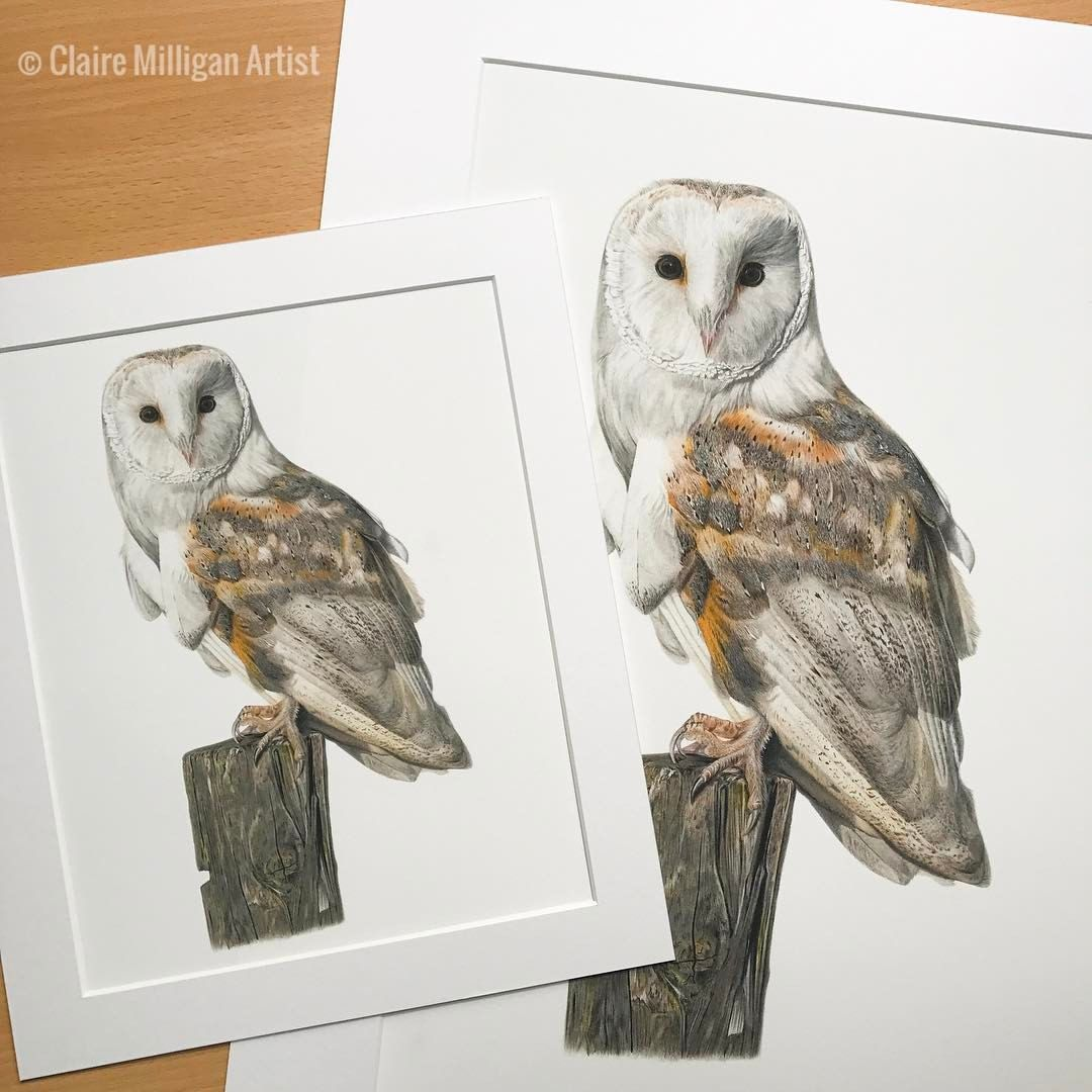 Brighten up your home for spring with a limited edition barn owl print -  Shop link