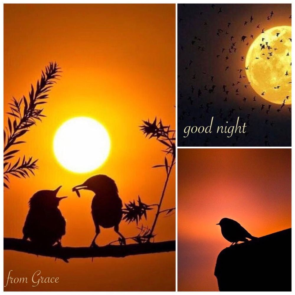 Magical Sunset Guten Morgen Grüße Kostenlos Guten Morgen Gruss Guten Morgen