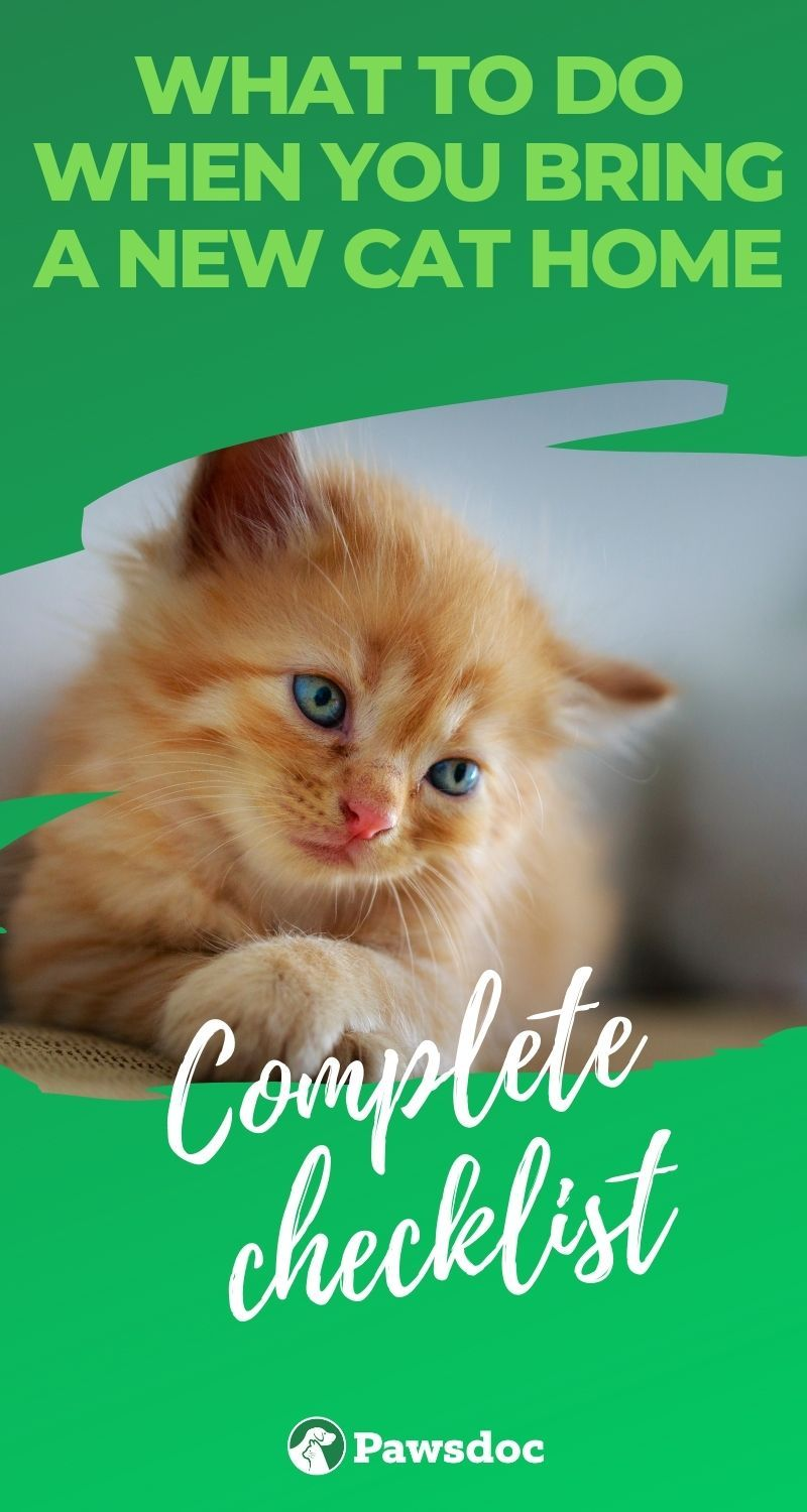 What To Do When You Bring A New Cat Home Checklist In 2020 Cat House Cat Advice Cats