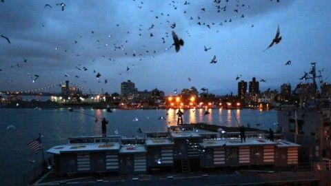 La danza dei piccioni di Duke Riley. A New York il cielo si illumina in una performance tecno-animalista. Ecco foto e video