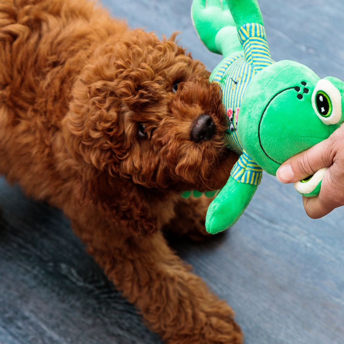 Black Friday Sale Plush Dog Toy 20 Off