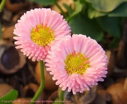 Pin On B Flowers