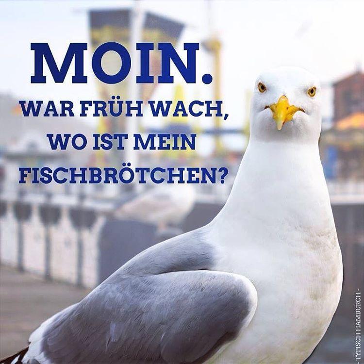 Hamburg Möwe Fischbrötchen Moinmoin Guten Morgen Lustig Guten