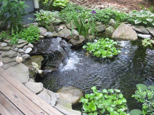 Gartenteich Pflanzen-Fische Gestaltungsideen For the Garden