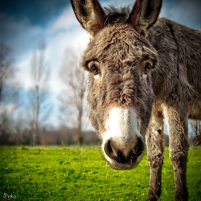 Pin on Donkeys