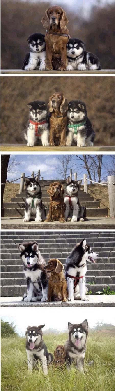 new dog old dog top tog