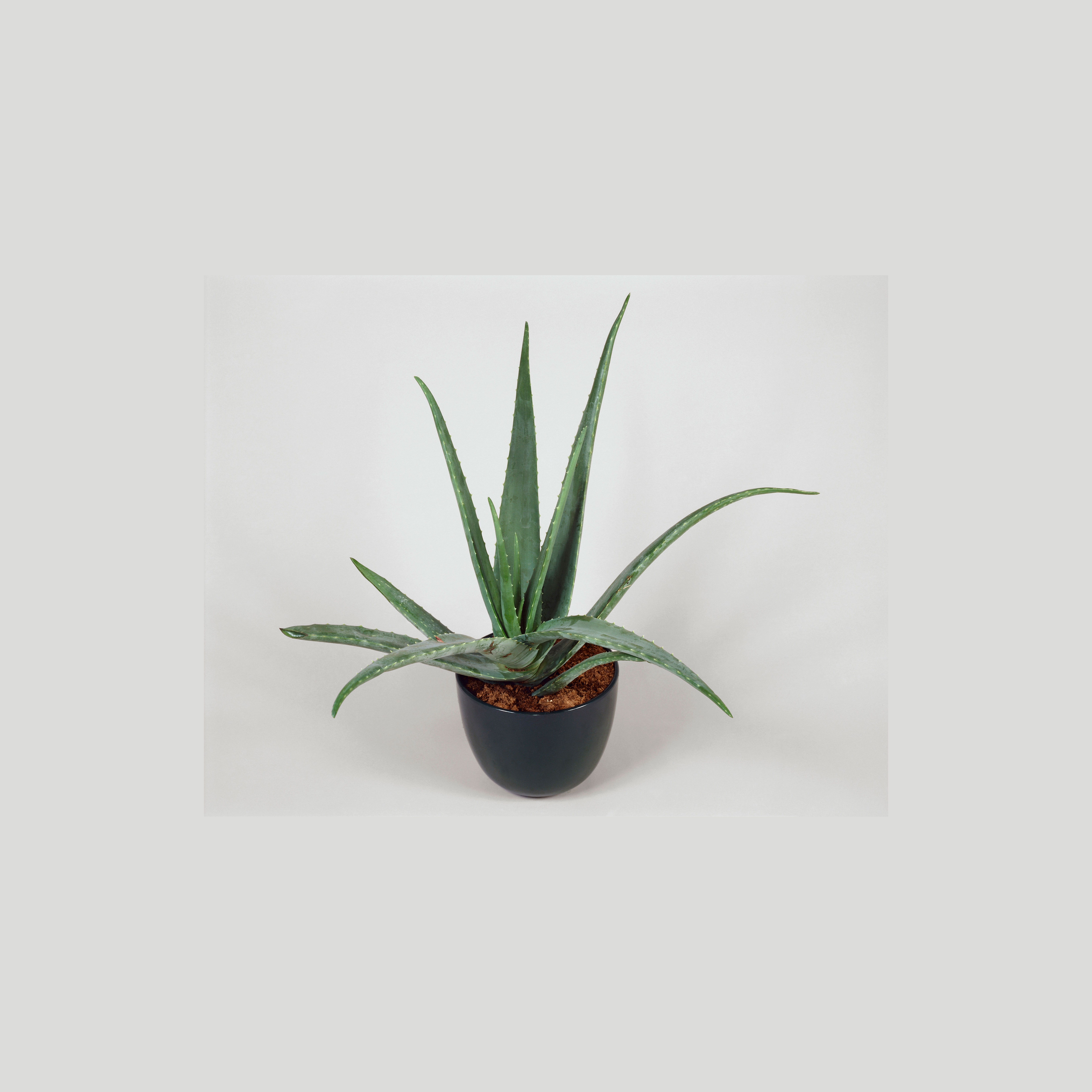These Easy Houseplants Clean Your Indoor Air While They