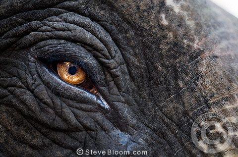 a0da9eeb0ede Elephant Eye Color