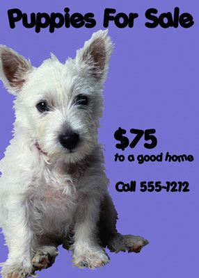 puppies for sale flyers