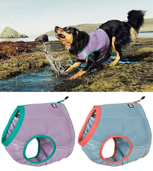 Keep Your Pup Cool In The Summer With One Of These Great Vests