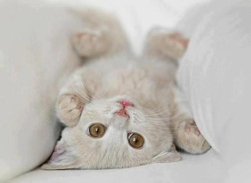 Love Meow  |  #kitten