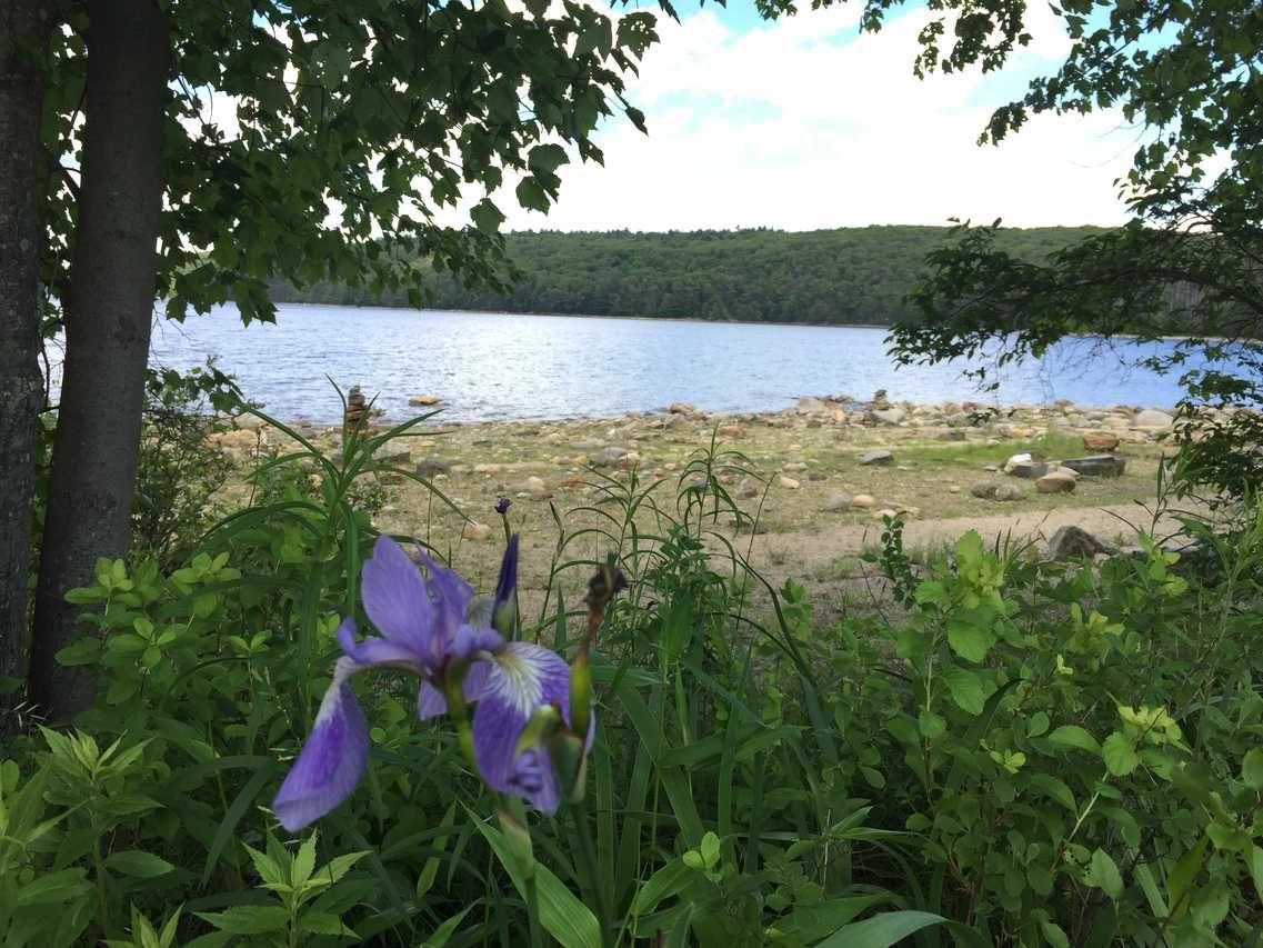 Hank's Meadow Loop Trail - 0.5 miles in Ware, MA at Quabbin ... on