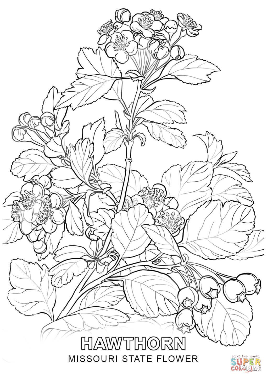Pin By Hannah Pustilnik On Florals Flower Coloring Pages