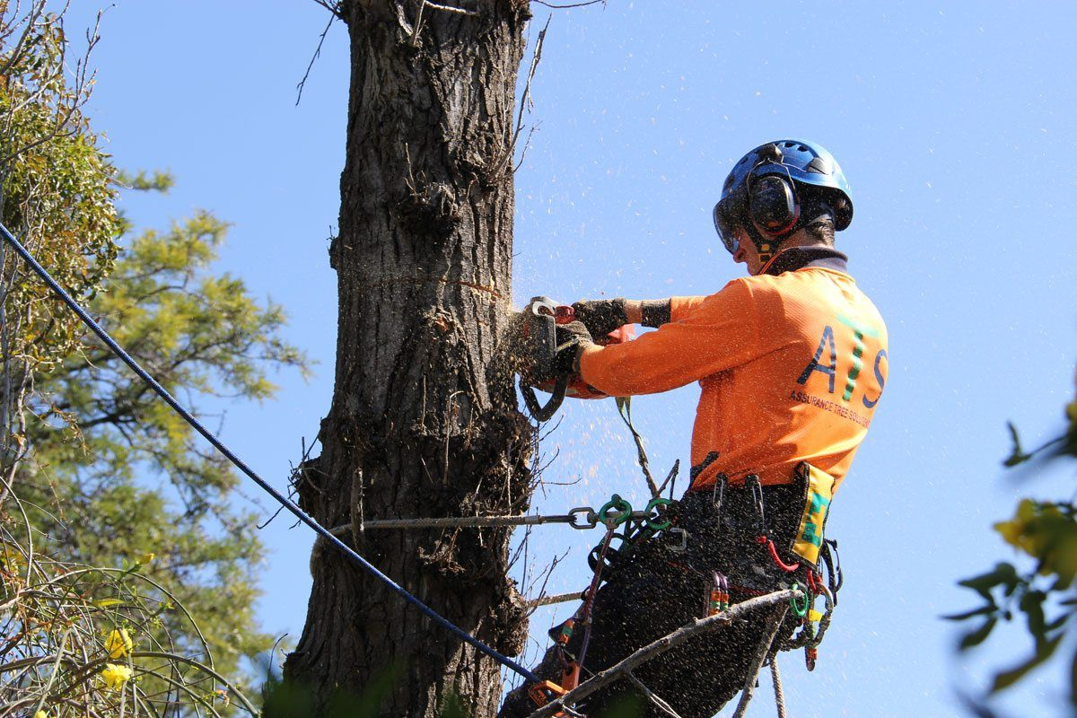 Tree Removal in Newcastle & Tree Lopping in Central Coast