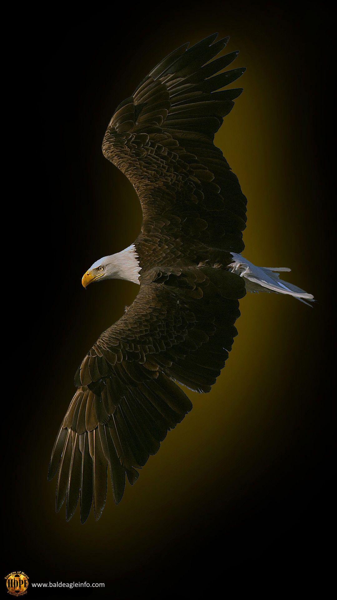 1080x1920 Bald Eagle Graphic By Hope Rutledge Eagle Wallpaper Animal Wallpaper Bald Eagle