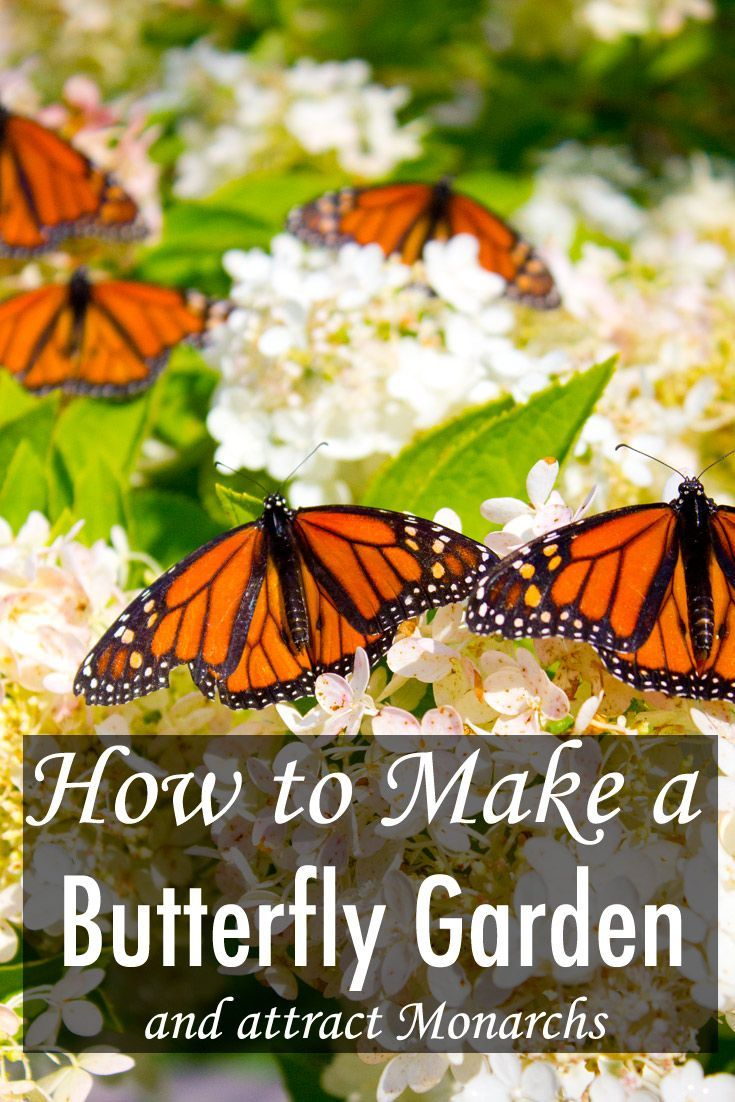 How To Make A Butterfly Garden And Other Ways To Help Save Monarchs From  Extinction