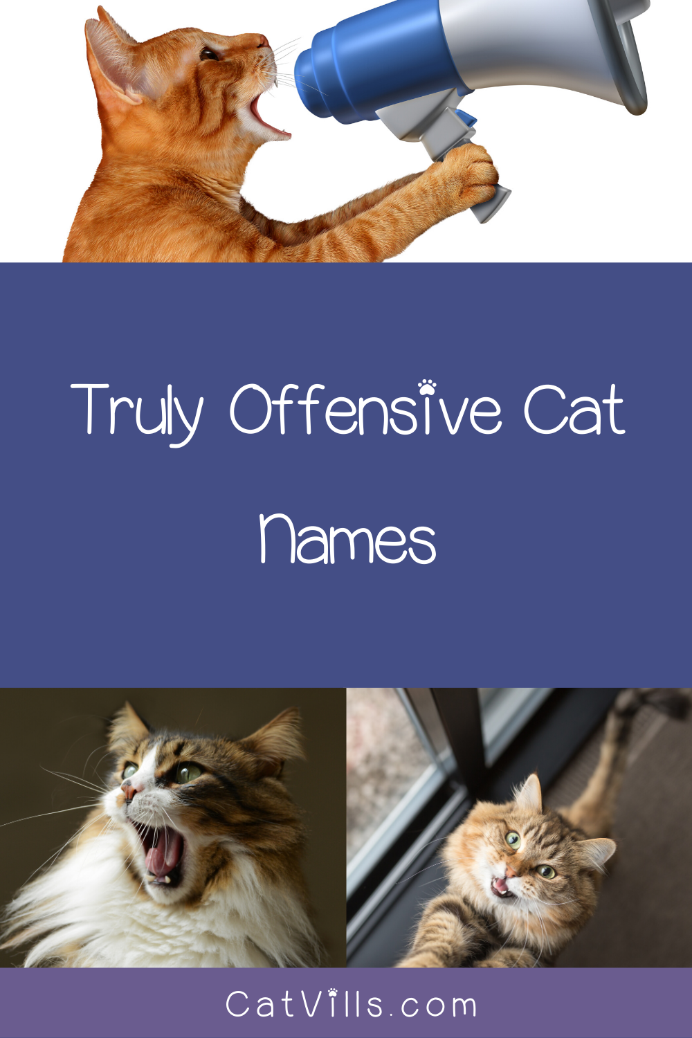 10 Inappropriate Names to Call a Cat Cat names, Names