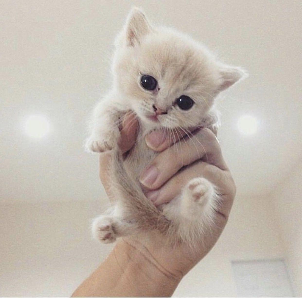 Resultat De Recherche D Images Pour Shigeru Onda Est Un Nain De 50 Centimetres Chats Adorables Animaux Adorables Animaux Mignons
