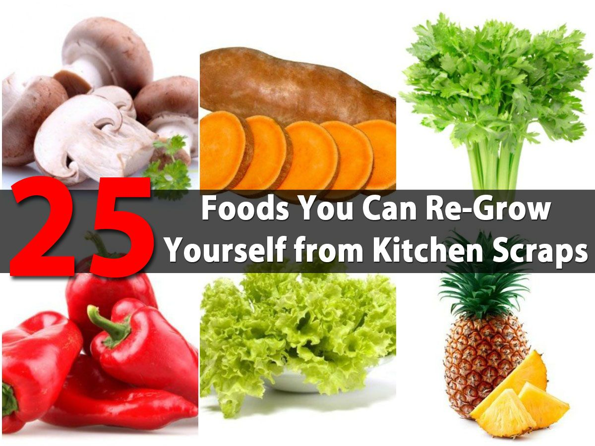25 Foods You Can ReGrow Yourself from Kitchen Scraps