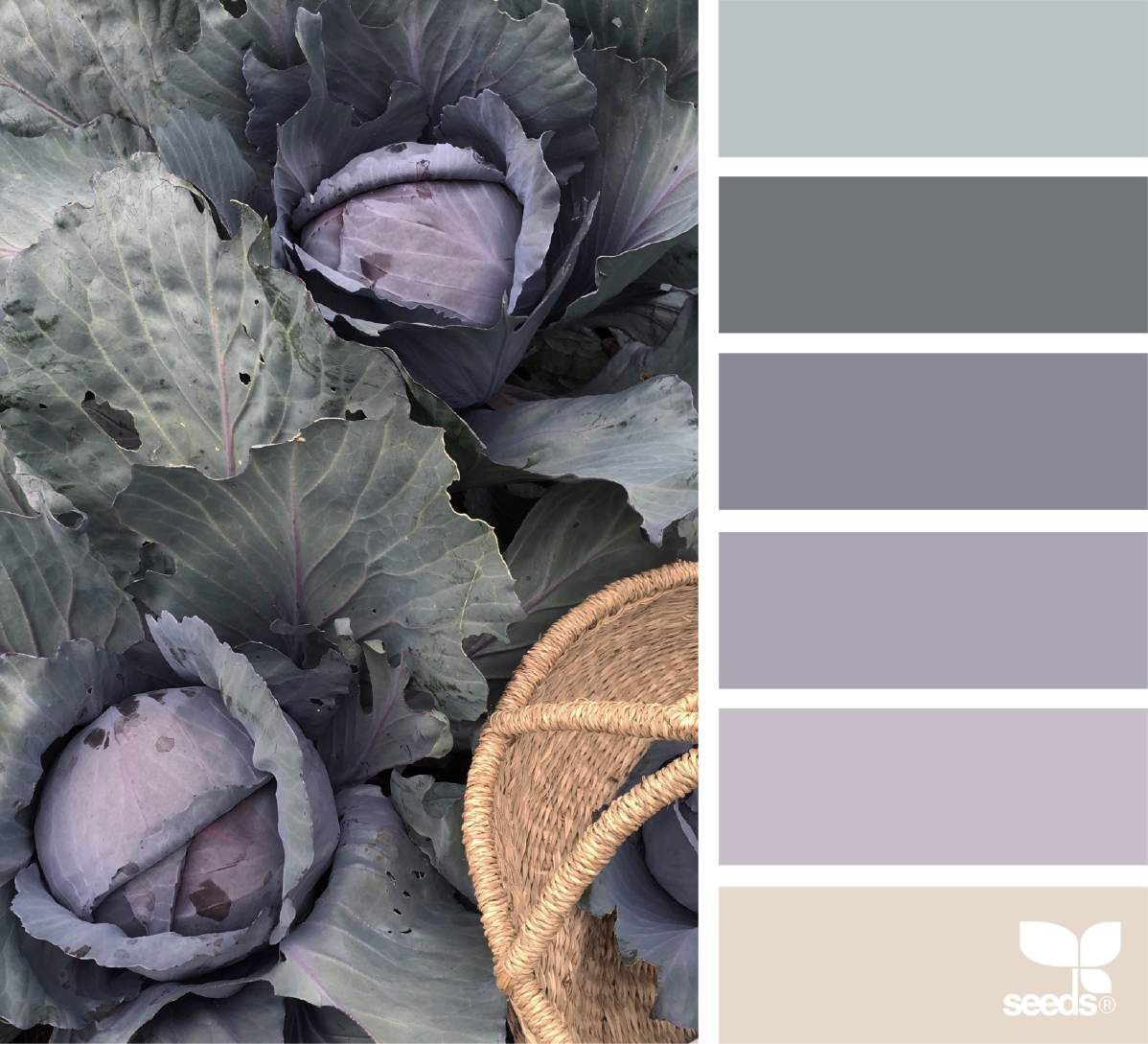 Graue Wandgestaltung Gathered Hues Design Seeds Website Design Wandfarbe