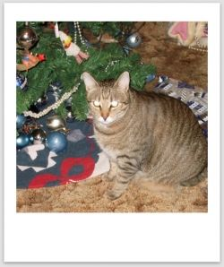 Actually, I should write that cats and Christmas Trees AND humans do not mix well. My cats get along very well with my Christmas Tree. I don't...