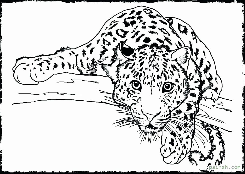 Realistic Animals Coloring Pages Fresh Fresh Coloring Pages Realistic Animals Download In 2020 Animal Coloring Pages Farm Animal Coloring Pages Detailed Coloring Pages