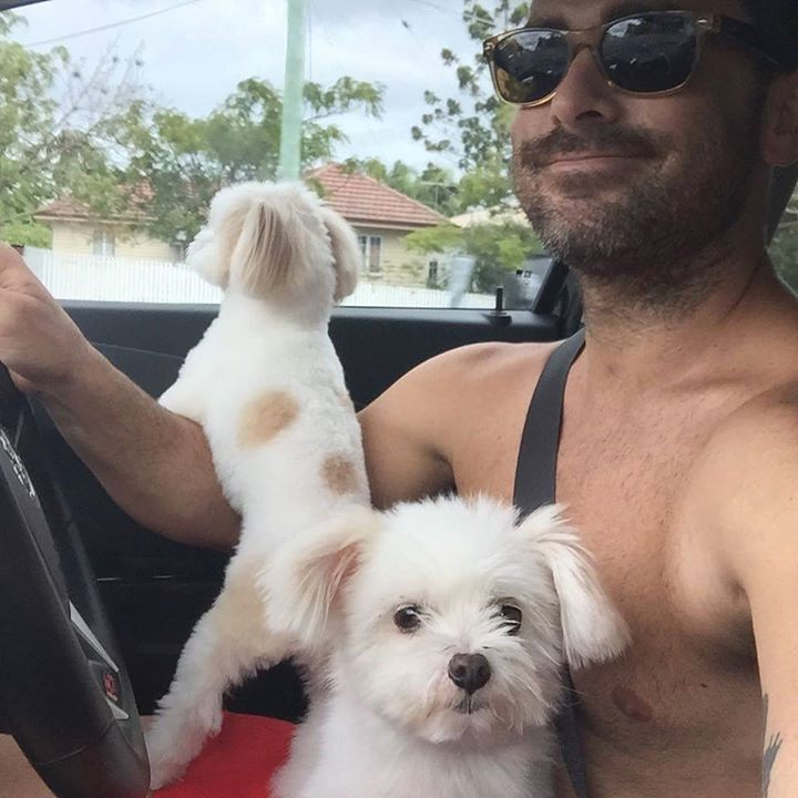 Driving with BAm BAm and BubbA #cutedogs #pomtease #smalldogs  Photo By: djbarramundi