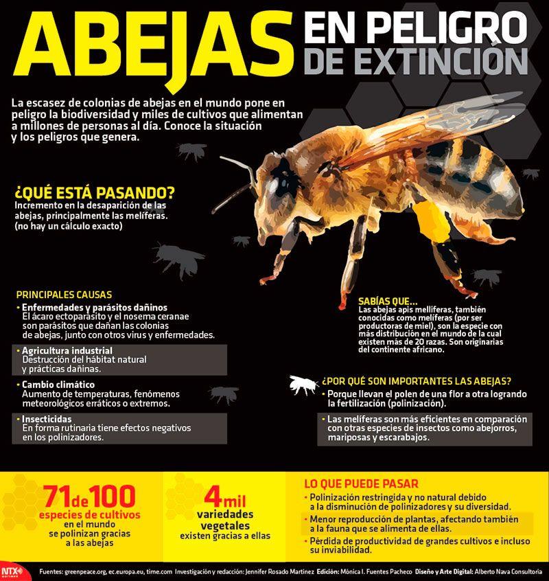 Abejas en peligro de extinción - Investigación y