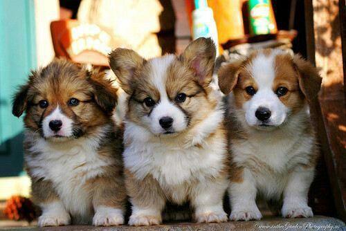Beautiful Mixed Chubby Adorable Dog - 79e7d19374e76061a7002158cc2a94d7  Collection_384359  .jpg
