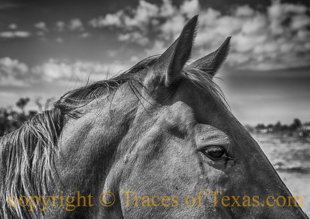 Just hanging out  in Fort Davis and living the good life.... what more can a horse ask for?Fort Davis