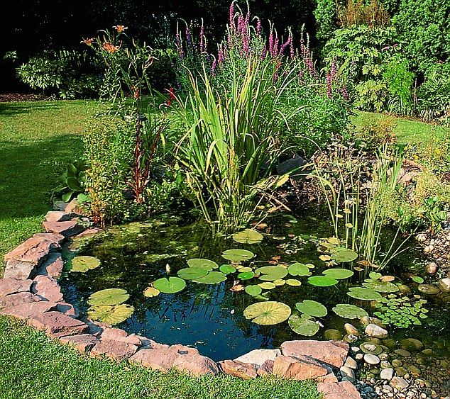 Pond life Now is the ideal time to build a wildlife