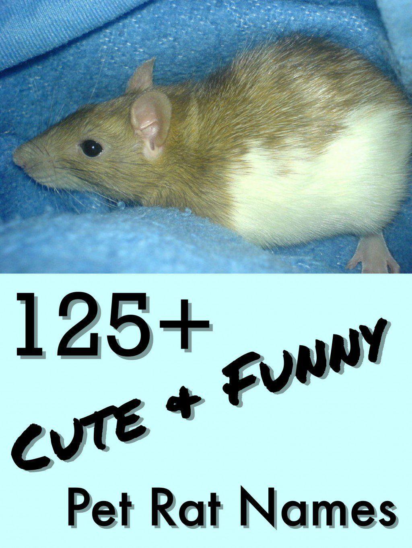 125 Cute And Clever Names For Your Pet Rat Pet Rats Pet Mice Cute Pet Names