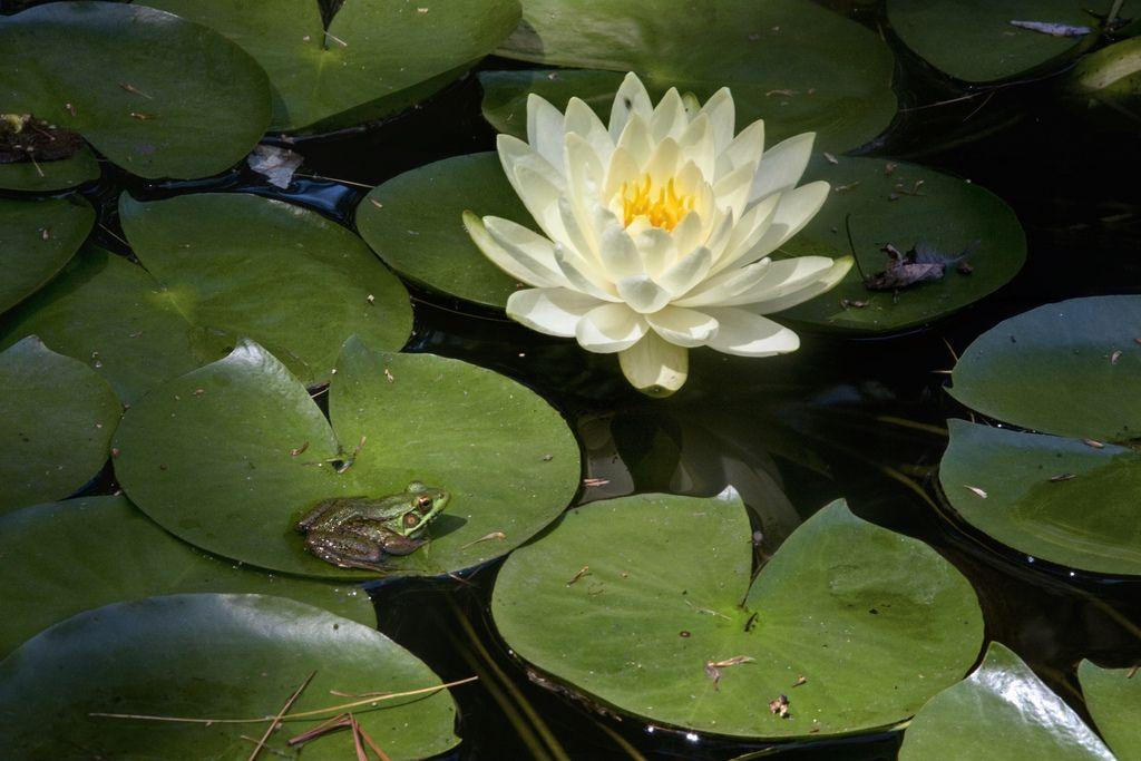 Build a Frog Pond | Diy pond, Garden frogs, Ponds backyard