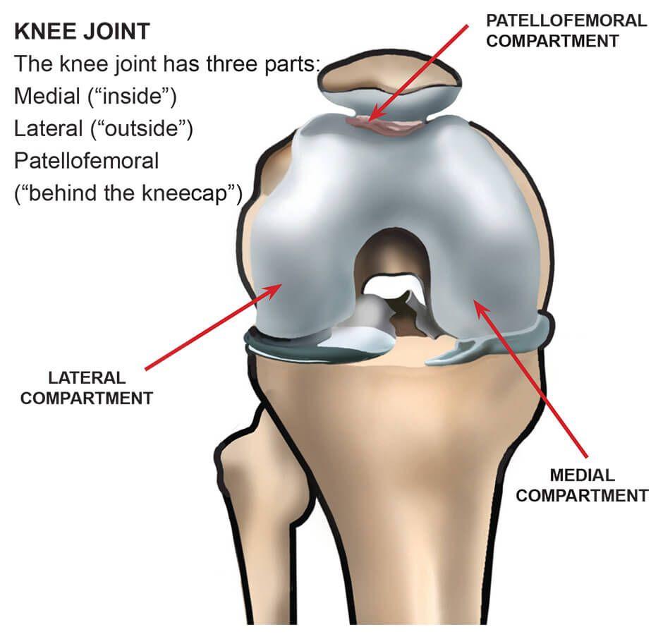 Parts Of Knee Diagram Human Anatomy Drawing Human Anatomy