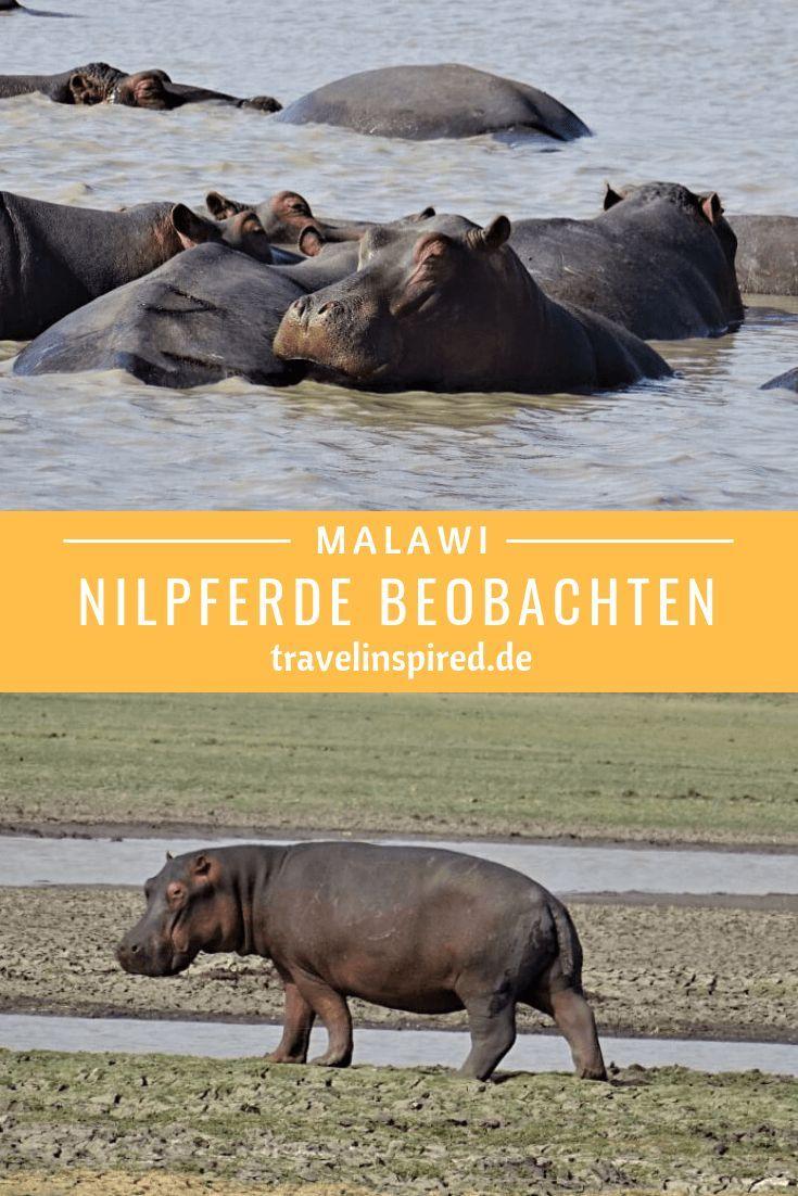Elefanten Identifizieren Freiwilligenarbeit In Malawi Travelinspired Afrika Urlaub Reisen Afrika Reisen