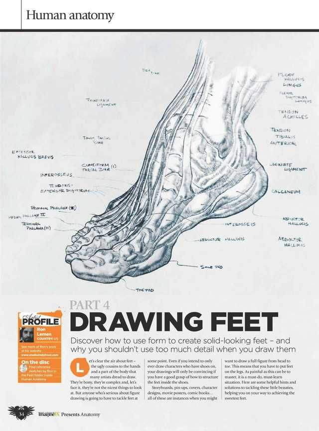 Book Scans   Human anatomy drawing, Anatomy for artists ...