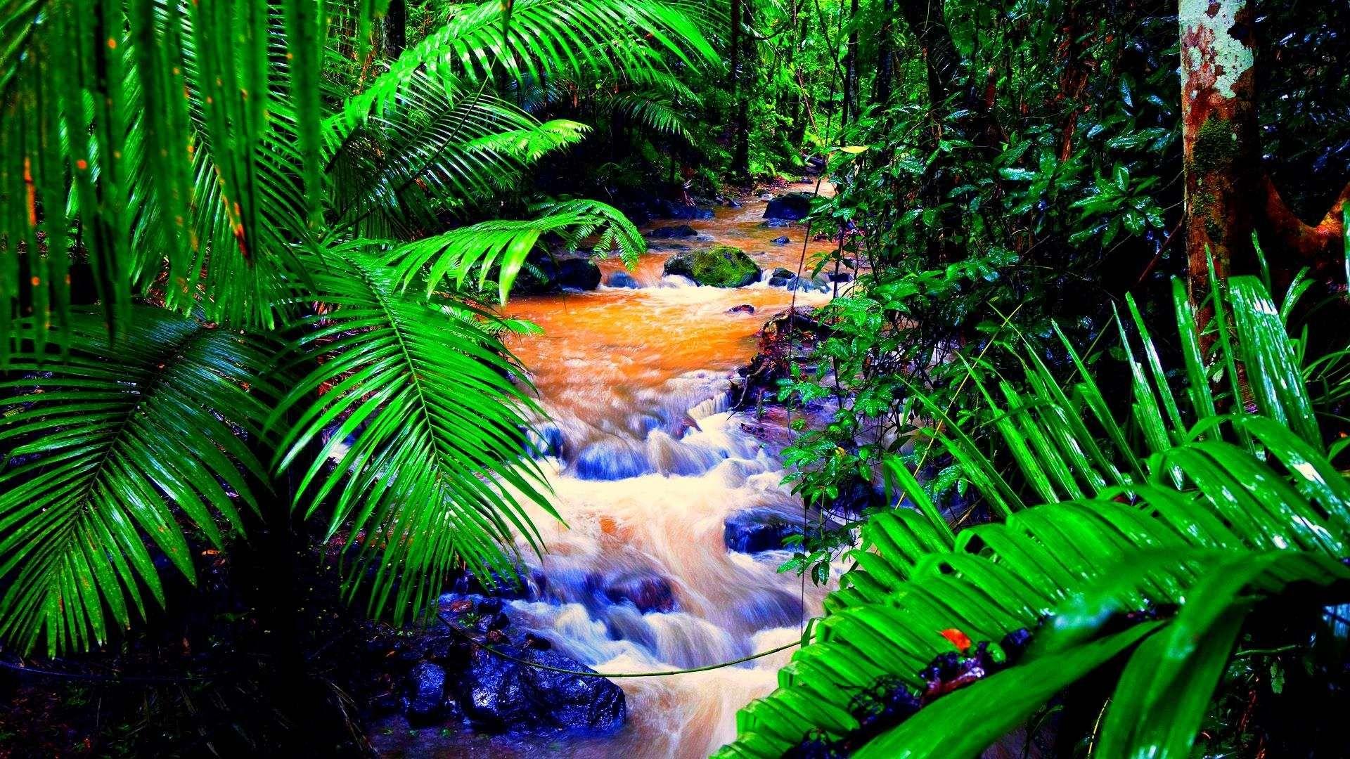 Tropical Rainforest Wallpaper For Desktop Background 1920x1080 Px 399 95 Kb Jungle Wallpaper Rainforest Pictures Nature Desktop Wallpaper