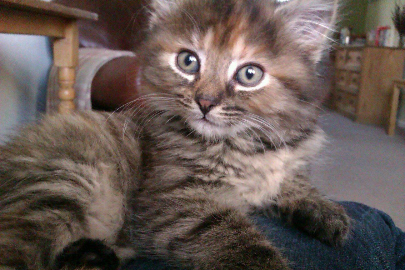 Being with Maisy, my Kitten Happy places, Kittens, My