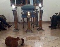Cães de rua comparecem a funeral de mulher que os alimentava diariamente