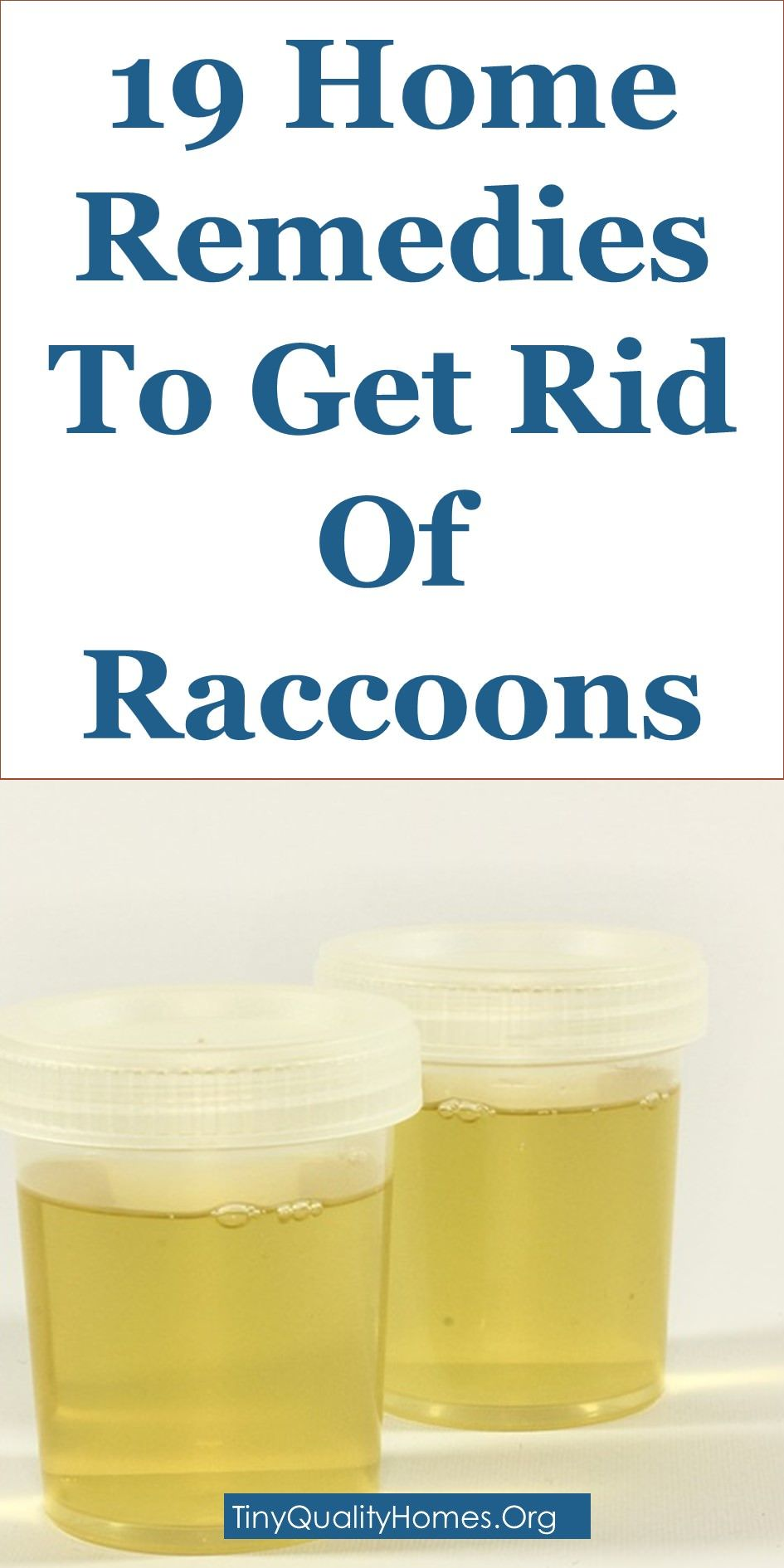 19 Quality Home Remedies To Get Rid Of Raccoons This Guide Shares