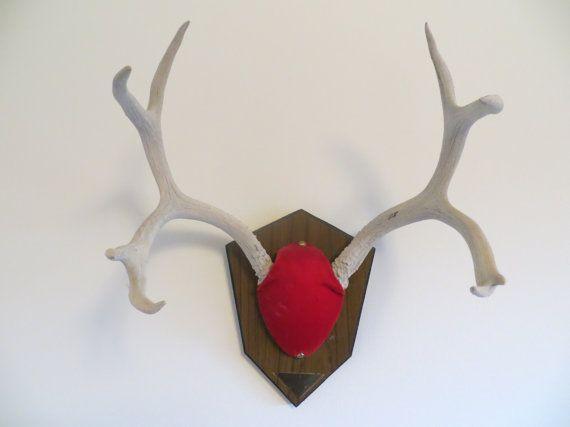 Vintage Mule Deer Antler Mount 8 Point By Mancavevintagemarket 107 00 Antler Mount Deer Antlers Wood Plaques