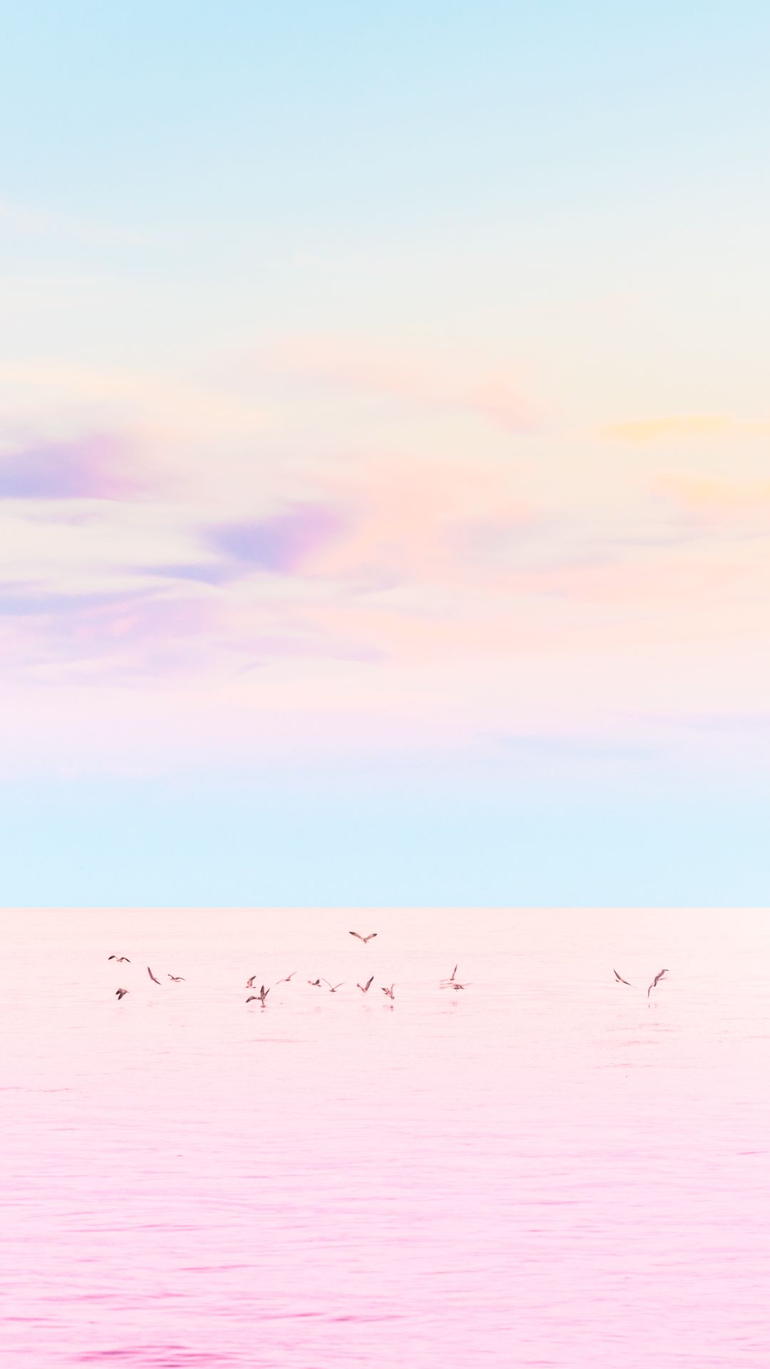 Birds At Sea Pastel Pink Iphone 6 Plus Hd Wallpaper Cuteiphonewallpaperstumblr Iphonewallp Iphone Wallpaper Sky Unique Iphone Wallpaper Minimalist Wallpaper