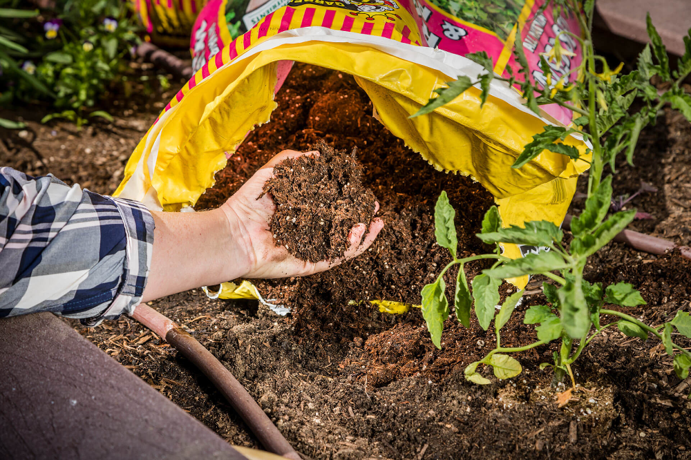 Learn the Difference Between Garden Soil and Raised Bed