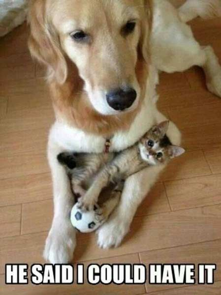 16 Funniest Pet Photos With Captions Cute Animals Animals