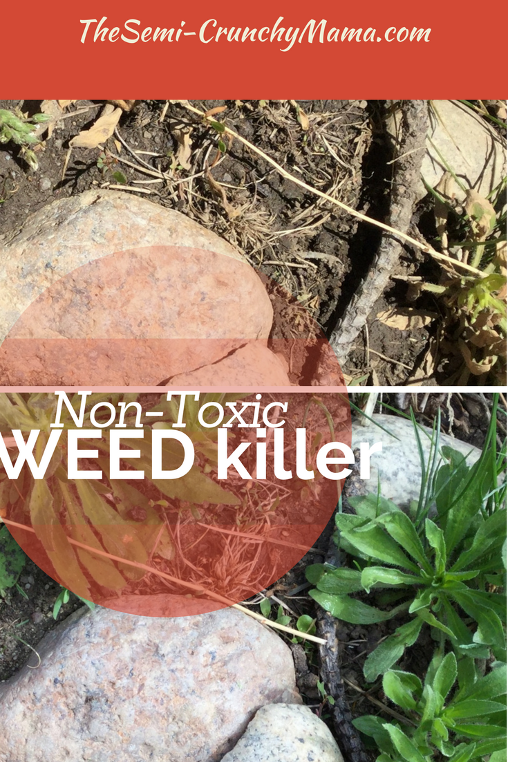Want to make your own weed killer diy do it yourself homemade gardens want to make your own weed killer diy do it yourself homemade solutioingenieria Choice Image