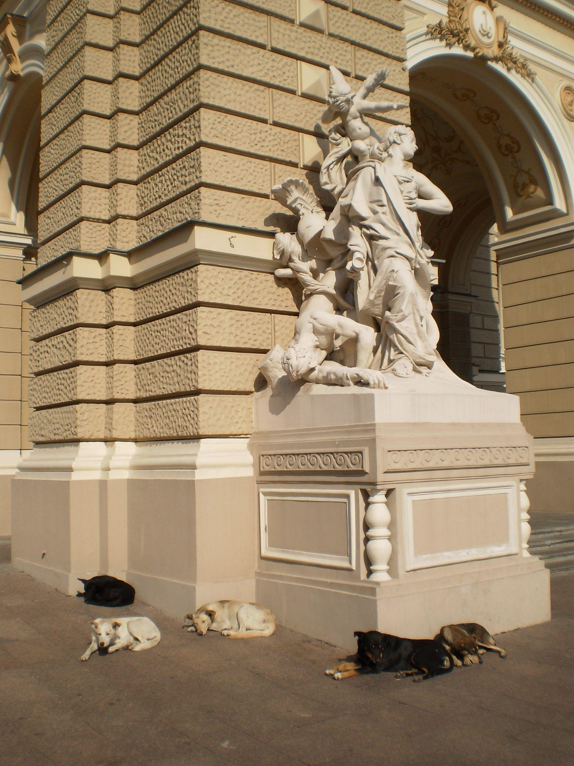 Hunde vor der Oper in Odessa
