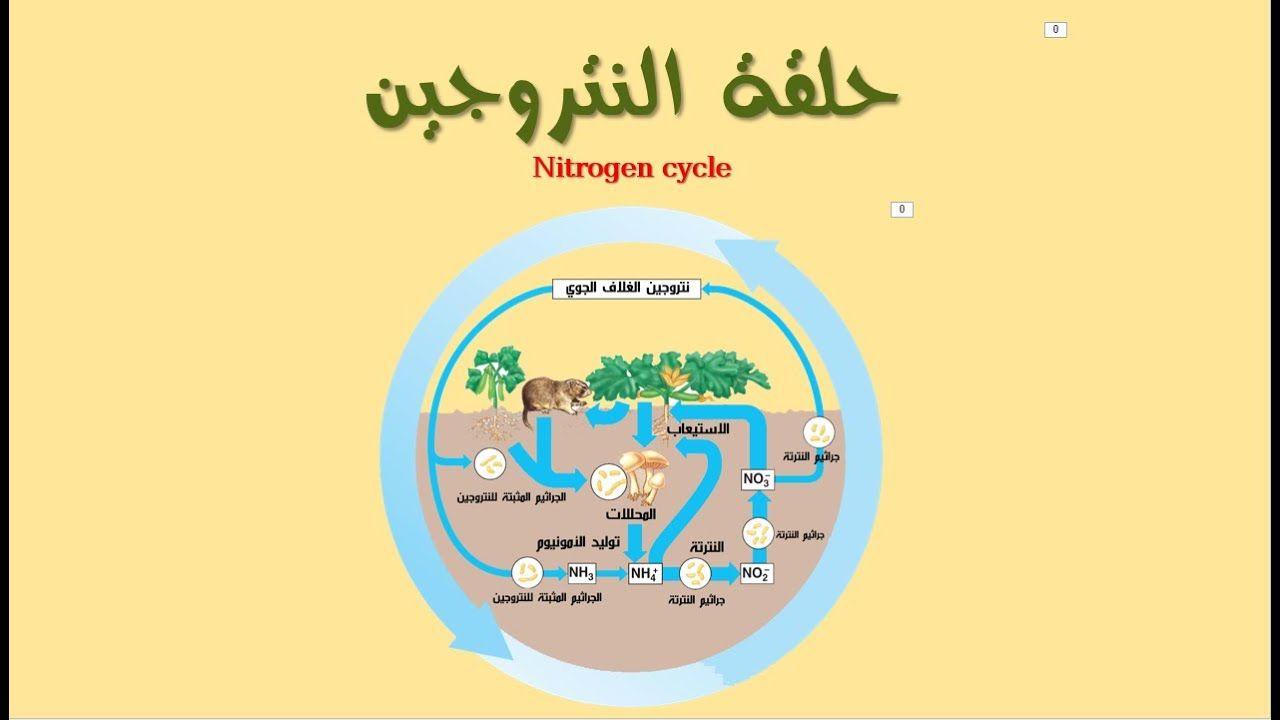حلقة النتروجين Nitrogen Cycle Nitrogen Cycle